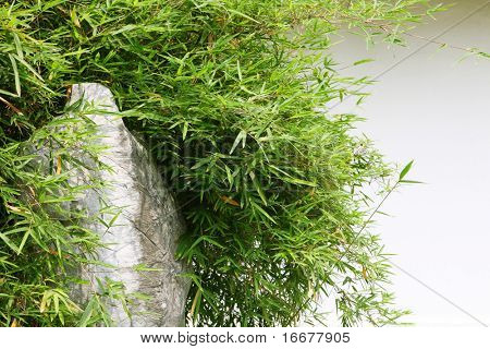 bamboo with rockery
