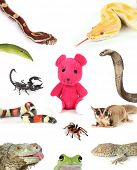 stock photo of king cobra  - Animals surround a teddy bear - JPG