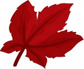 picture of chloroplast  - illustration of leaf on a white background - JPG