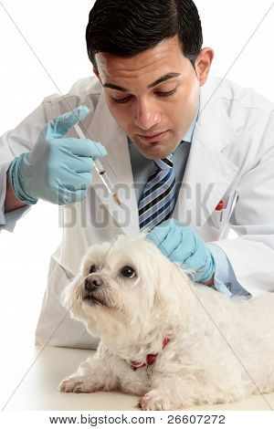 Vet Medicating Small Dog Needle
