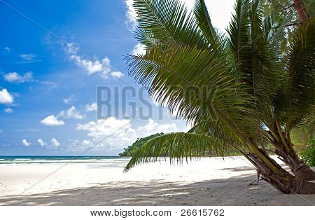 Beautiful tropical beach with clear ocean and palm trees
