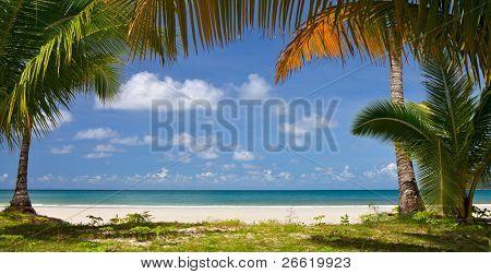 Calm beach with palm