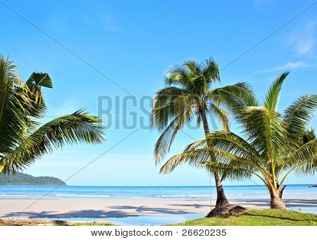 Summer scene. Exotic beach with palm trees under blue sky