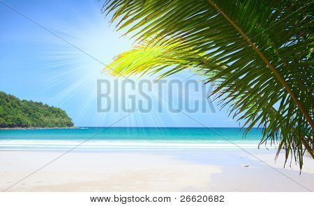 Sunshine beach with palm tree leaves under blue sky and far away island