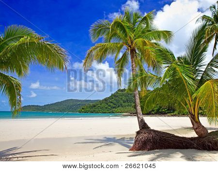 Luxury paradise beach with beautiful green palm trees on white sand