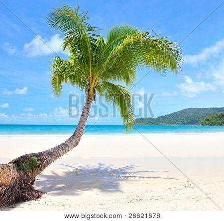 beach scene on a beautiful Island