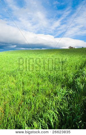 green grass and stormy sky