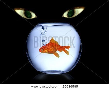 Cats eyes watching fish