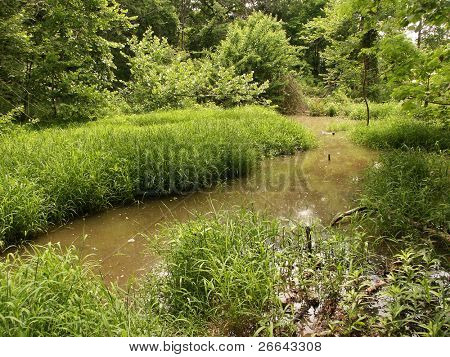 grasbedeckte Sumpf land