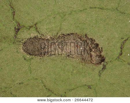 Pegada humana no verde. Poderia ser usada para o conceito de pegada de carbono.