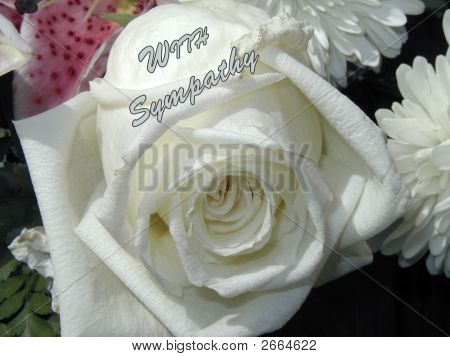 With Sympathy White Rose