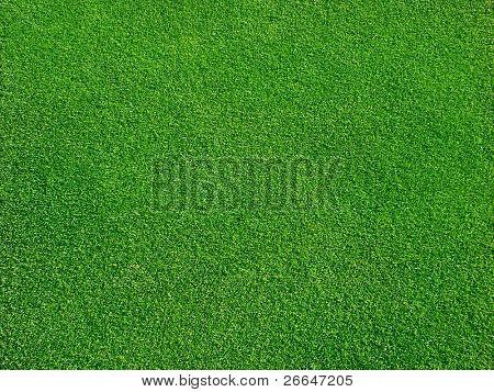 Green grass on golf course