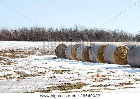 Bails of hay on snowy field