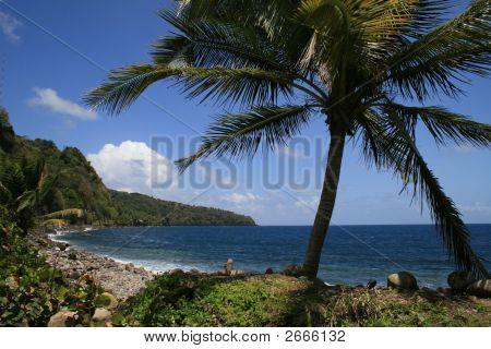 Lonely Palm And Rocky Coast