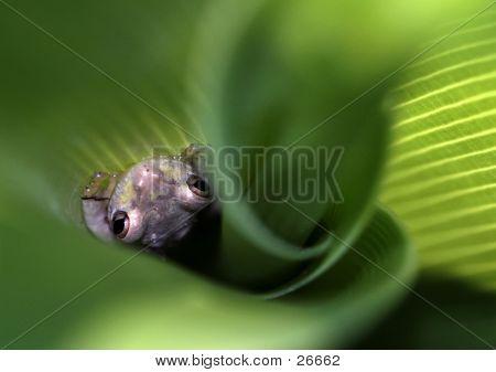 Frog In A Swirl