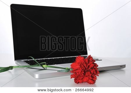 Red rose on laptop