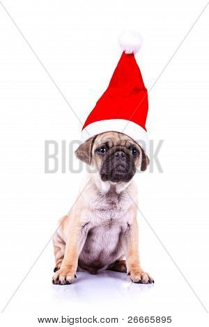 Pug Puppy Wearing A Santa Hat