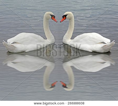 Swans - Reflections