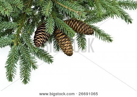 fir tree branches with cones,christmas decoration