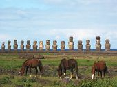 Wild horses against Ahu Tongariki. Easter Island