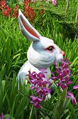 pic of thumper  - Easter bunny in the grass - JPG