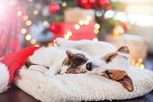 Cat and dog sleeping under christmas tree. Pets friends. Happy New Year poster