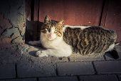 Pictures Of The Lovely Cat As Domestic Animal In View poster
