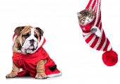 New Years puppy English bulldog and Christmas kitten, dog and cat poster