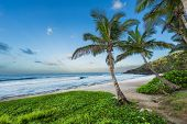 Scenic View Of Palm Trees On Grande Anse Beach, Reunion Island poster
