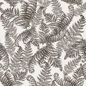Fern Herbs, Tropical Forest Plant Leaves Seamless Vector Wrapping Paper. Modern Herbal Pattern. Brac poster