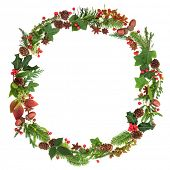 Winter and Christmas wreath garland with traditional natural flora and fauna of the season on white  poster