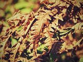 The Most Dryness Year In History.  Dry Burnt Dead Fern Stalks On Dry Forest Natural Background poster
