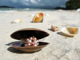 picture of pearl-oyster  - Seashells on a beach of Langkawi island - JPG