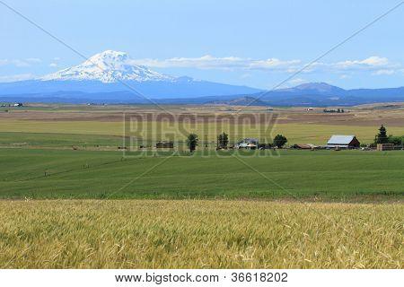 Mount Adams And Farm Fields