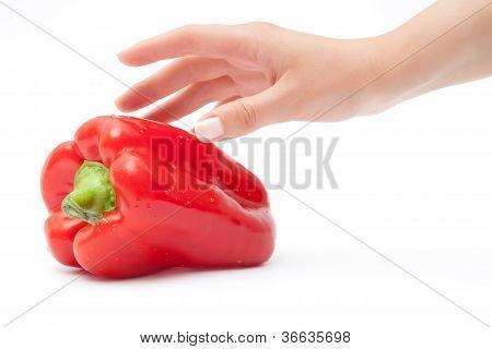 woman hand red bellpepper