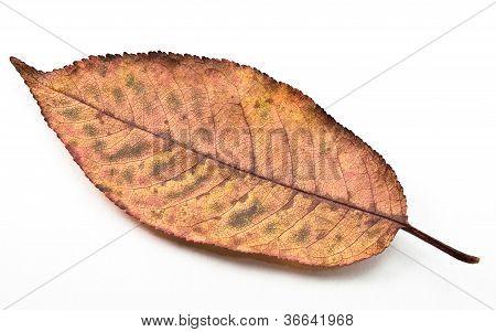 folha de outono