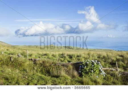 Pasture Landscape Of Pico Island, Azores