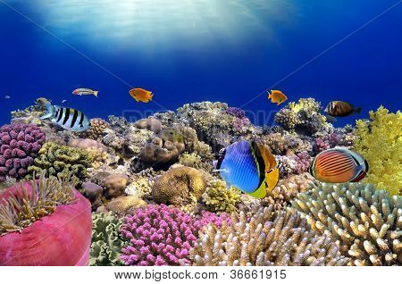 Unterwasser-Welt. Korallen Fische des Roten Meeres.