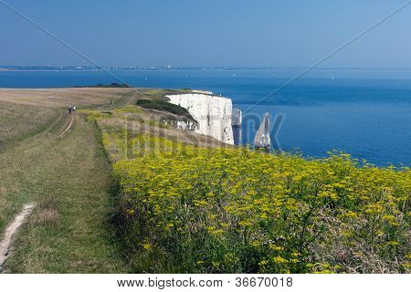 Old Harry Rocks And Wildflowers