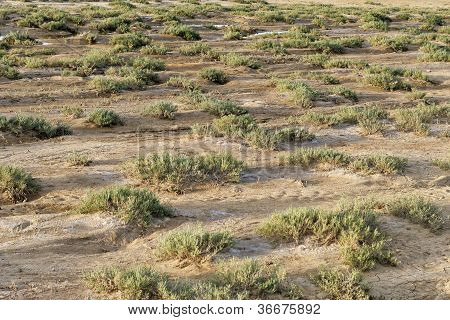 Dry terrain with scrubby vegetation