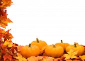 stock photo of fall leaves  - Fall leaves with pumpkin on white background fall harvest frame - JPG