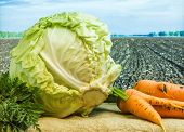 stock photo of exhumed  - fresh cabbage and carrots amid the countryside and fields - JPG