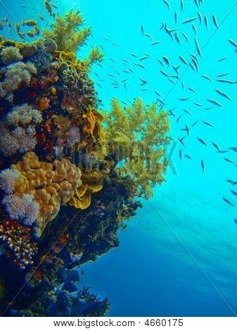 Egypt Reef