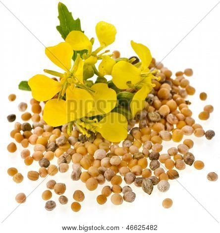 Mustard seeds with mustard flower close up macro  isolated on white background