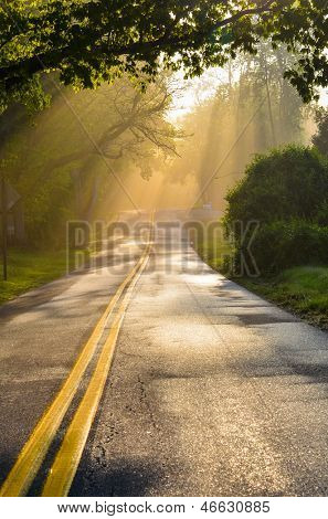 Forest road in early foggy morning with visible sun rays