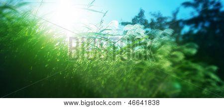 Bright sunshine seen through leaves of grass