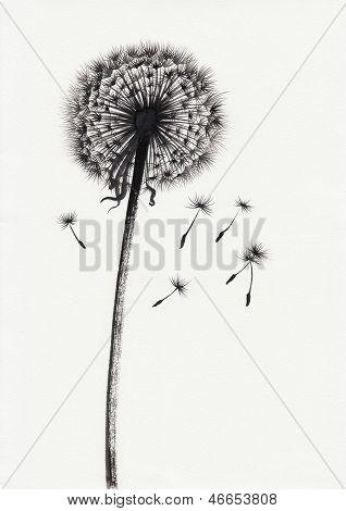 Dandelion Watercolor Painted Image