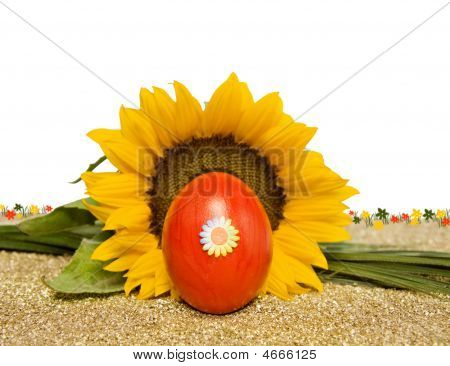 Easter Red Decorated Egg With Sunflower Over White