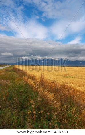 Yellow Fields, Clouds And Mountains. Altay