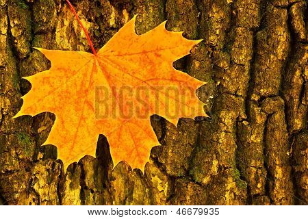 Autumn Fall. Yellow Leaf On Tree Background